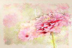 Abstract pink colorful shape on flower blooming watercolor illustration painting. royalty free stock photo