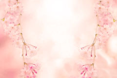 Abstract pink flower background Royalty Free Stock Photo