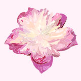 Abstract pink flower,  beautiful blossom illustration, v Stock Image