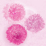 Abstract pink flowers Stock Image