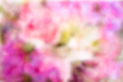 Abstract pink flowers bokeh  background. Stock Images