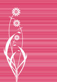 Abstract pink flowers lines cover Royalty Free Stock Image
