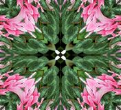 Abstract Pink and Green Design stock image