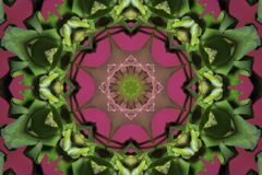 abstract pink with green ornament (mandala, kaleidoscope) Stock Image