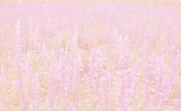 Abstract of bokeh pink pastel background. Abstract of pink pastel background Royalty Free Stock Image