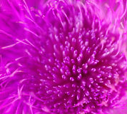 Abstract pink petals Stock Image