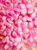 Abstract pink petals. In depth of field focus Royalty Free Stock Photography