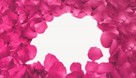 Abstract Pink Rose Petals as Frame used as Template with Soft Focus Color Filtered Background Stock Photography