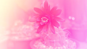Abstract pink tone flower Stock Photos
