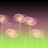 Abstract pink transparent flowers Stock Photography