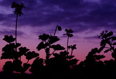 Abstract Plant Silhouette royalty free stock image