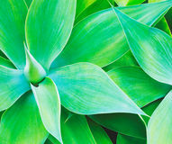 Abstract Plant Texture Royalty Free Stock Photos