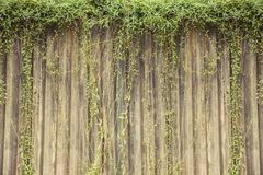 Abstract plant wall background. Plant on the concrete wall. Stock Photos