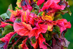 Abstract plants with colorful leaves.  Stock Photography