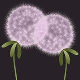 Abstract plants dandelions Stock Photos