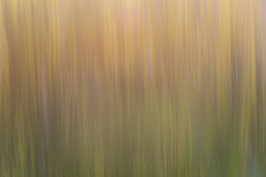 Abstract plants stems Royalty Free Stock Image