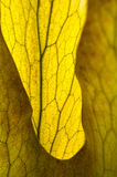 Abstract platycerium fern close-up Royalty Free Stock Photo