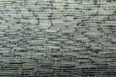 Abstract, polarizing micrograph of Grimmia moss leaf cells. Stock Image