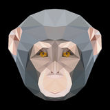 Abstract polygonal chimpanzees monkey portrait Royalty Free Stock Photography