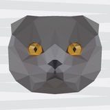 Abstract polygonal geometric triangle grey colored british cat portrait background Royalty Free Stock Photo