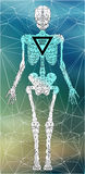 Abstract polygonal skeleton Royalty Free Stock Image