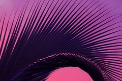 Abstract Pop Art Style Dark Blue Palm Tree Leaf on Purple Pink Background stock images