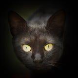 Abstract portret van zwarte kat Stock Foto's
