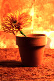Abstract Potted Flower 2. Abstract Photo of a Flower in a Pot With Lighting, Color and Blur Effect Royalty Free Stock Photo