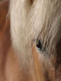 Abstract of a pretty horses face Royalty Free Stock Photography