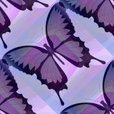 Abstract purple background with butterfly Royalty Free Stock Photo