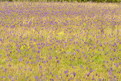 Abstract purple field Stock Images