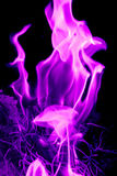 Abstract purple fire flames Royalty Free Stock Images