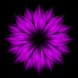 Abstract purple flower on black background Stock Images
