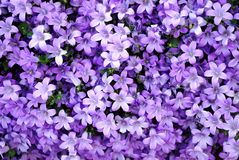 Abstract purple nature