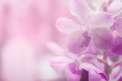 Abstract  purple orchid  background Royalty Free Stock Image