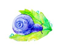 Abstract purple snail on a large green leaf. Watercolor illustration isolated on white background stock illustration