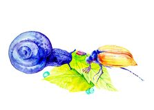 Abstract purple snail and may bug on large green leaves. Watercolor illustration isolated on white background royalty free illustration