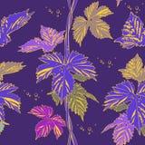 Abstract purple vine liana leaves hops Stock Photos
