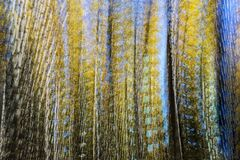 Abstract Photo of Quaking Aspens in Fall Royalty Free Stock Images
