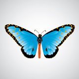 Abstract Queen Butterfly. On soft background Stock Images