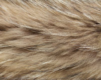 Abstract raccon fur background Stock Photography