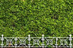 Abstract railing bushes Stock Image