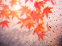 Abstract raindrop on autumn leave Royalty Free Stock Photography