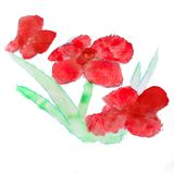Abstract red floral watercolor paintings hand Stock Photo