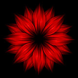 Abstract red flower on black background Royalty Free Stock Images