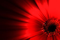Abstract Red Flower. With Light Shines Royalty Free Stock Photography