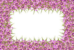 Abstract red purple unknown flowers background Royalty Free Stock Images