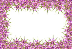 Abstract red purple unknown flowers frame Stock Photography