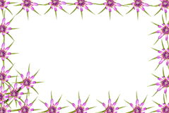 Abstract red purple unknown flowers frame Royalty Free Stock Photos