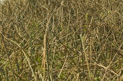 Abstract reeds Royalty Free Stock Photography